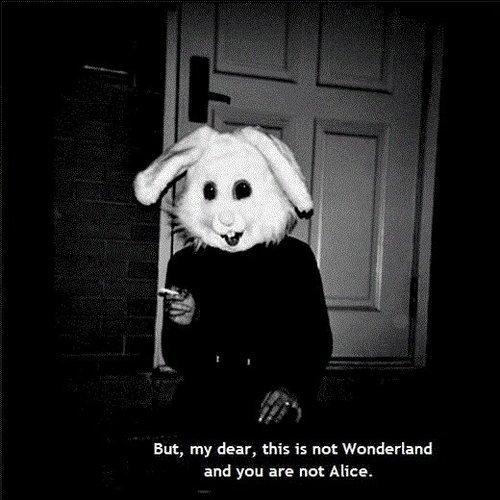 not-wonderland
